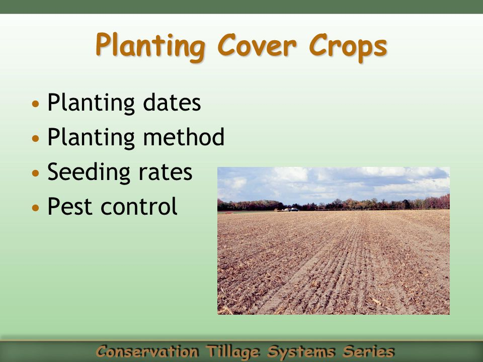 Planting Cover Crops Planting dates Planting method Seeding rates