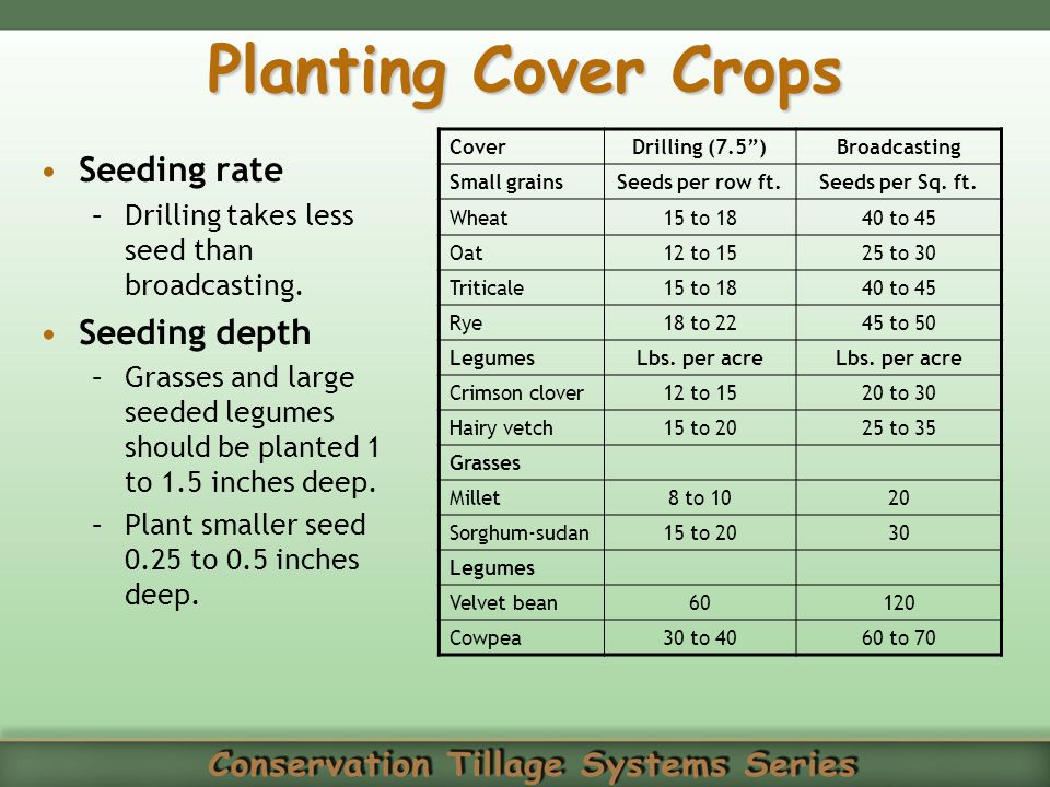 Planting Cover Crops Seeding rate Seeding depth