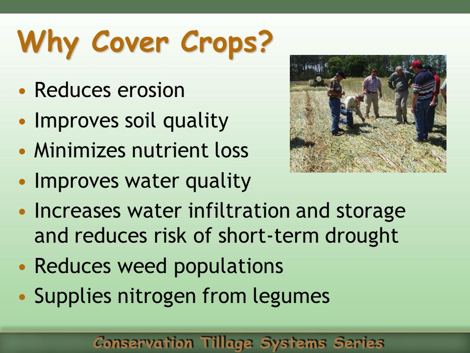 Why Cover Crops Reduces erosion Improves soil quality