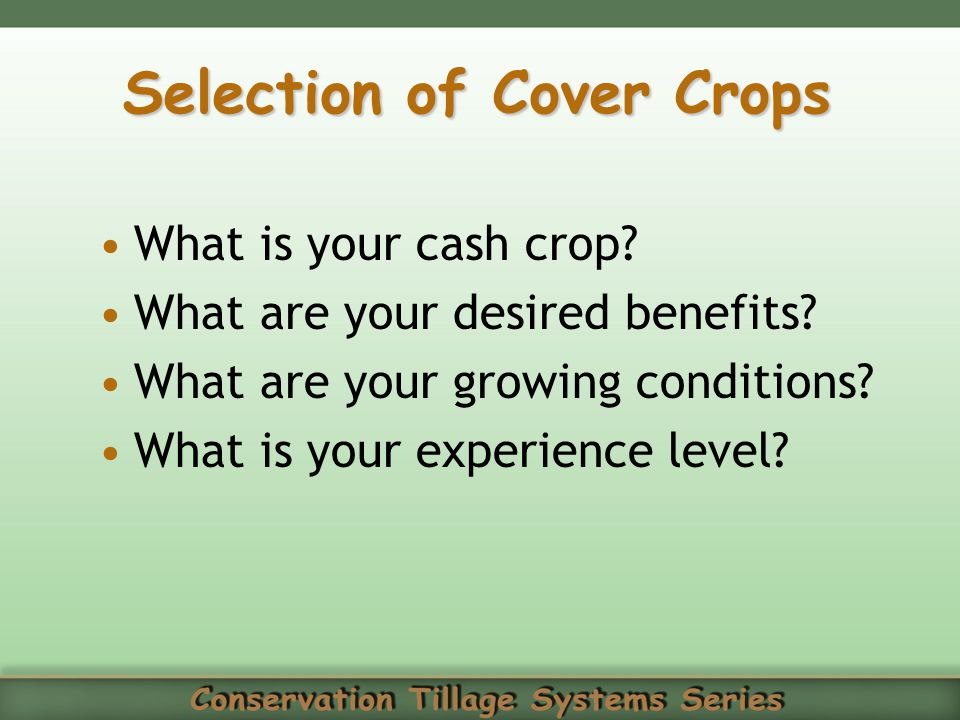 Selection of Cover Crops
