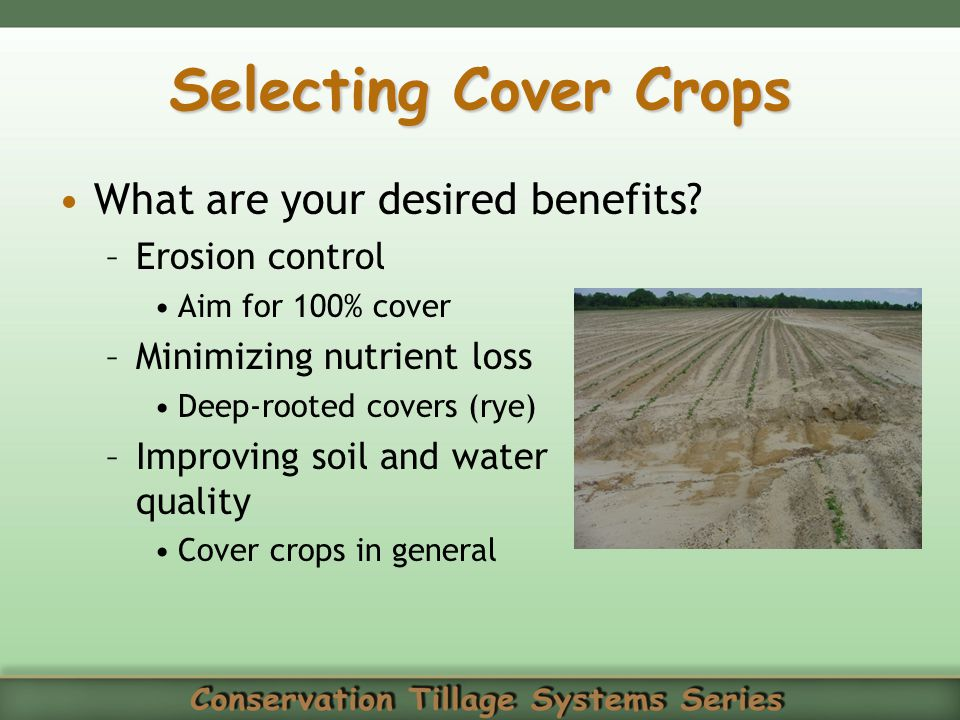 Selecting Cover Crops What are your desired benefits Erosion control
