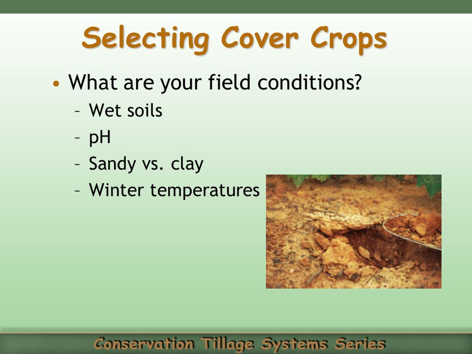 Selecting Cover Crops What are your field conditions Wet soils pH