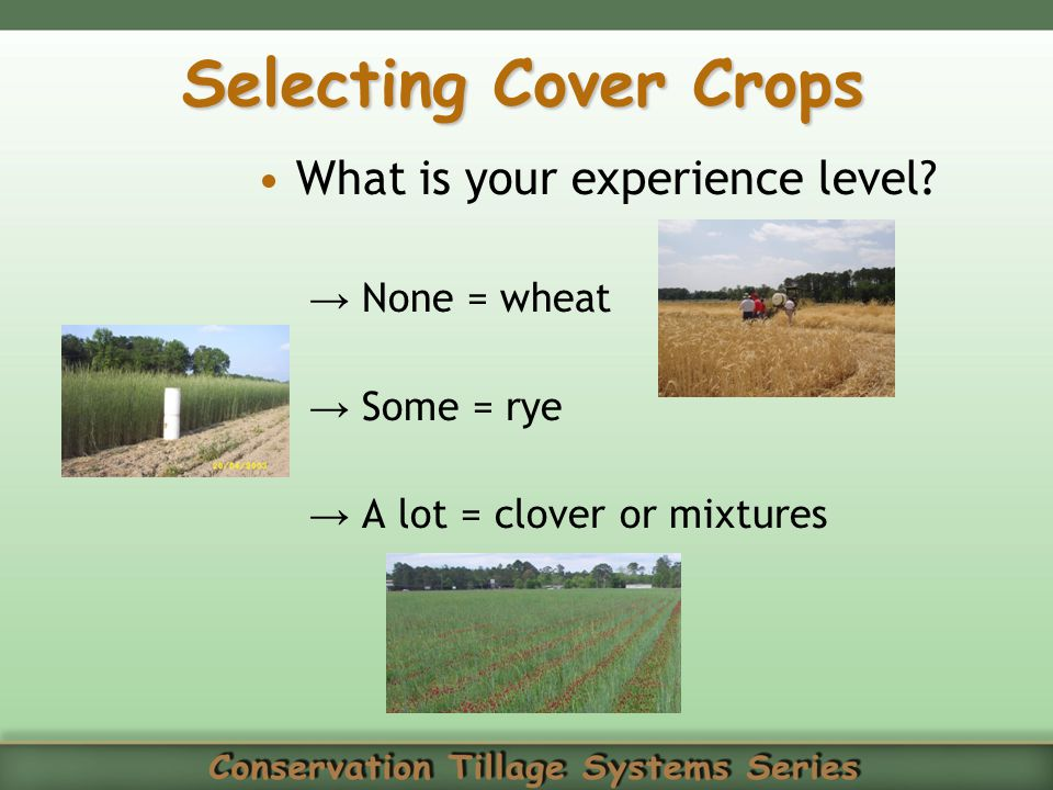 Selecting Cover Crops What is your experience level None = wheat
