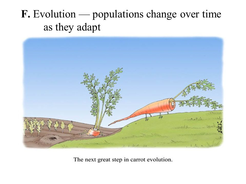an introduction to the factors for vegetation evolution over time Zonation and succession introduction to refer to the evolution of plant communities over time following disruption - ie from the pioneer species which initially colonise the bare changes in the vegetation over time however.