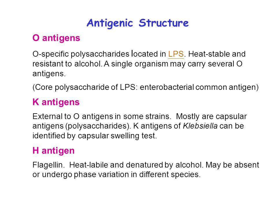 K Antigen Enterobacteriac...