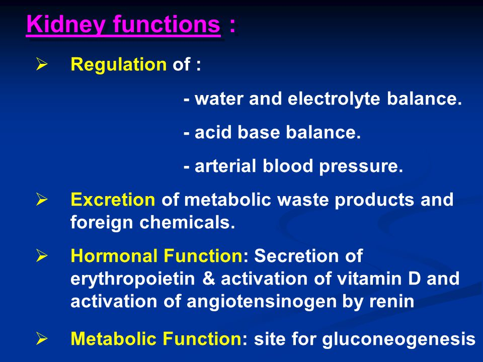 Kidney functions : Regulation of : - water and electrolyte balance.