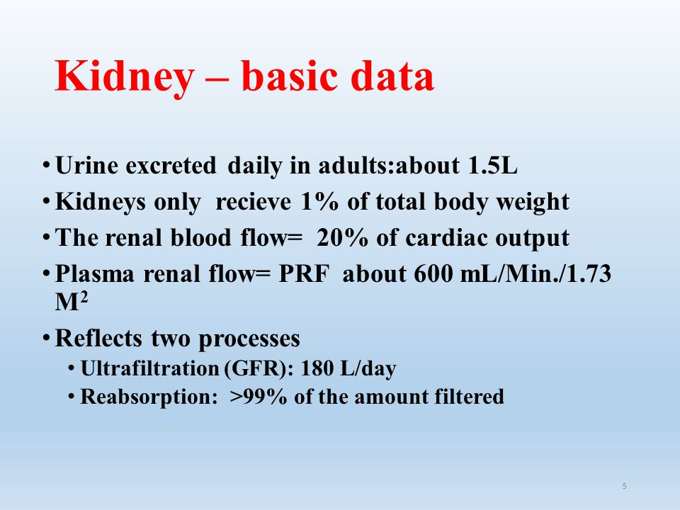 Kidney – basic data Urine excreted daily in adults:about 1.5L