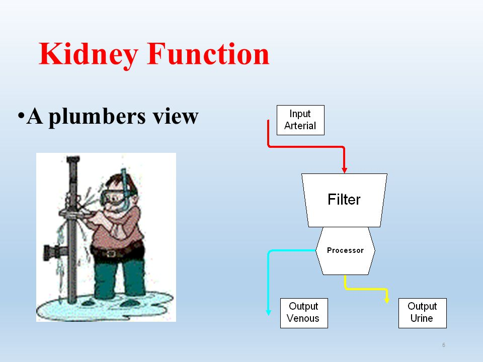 Kidney Function A plumbers view