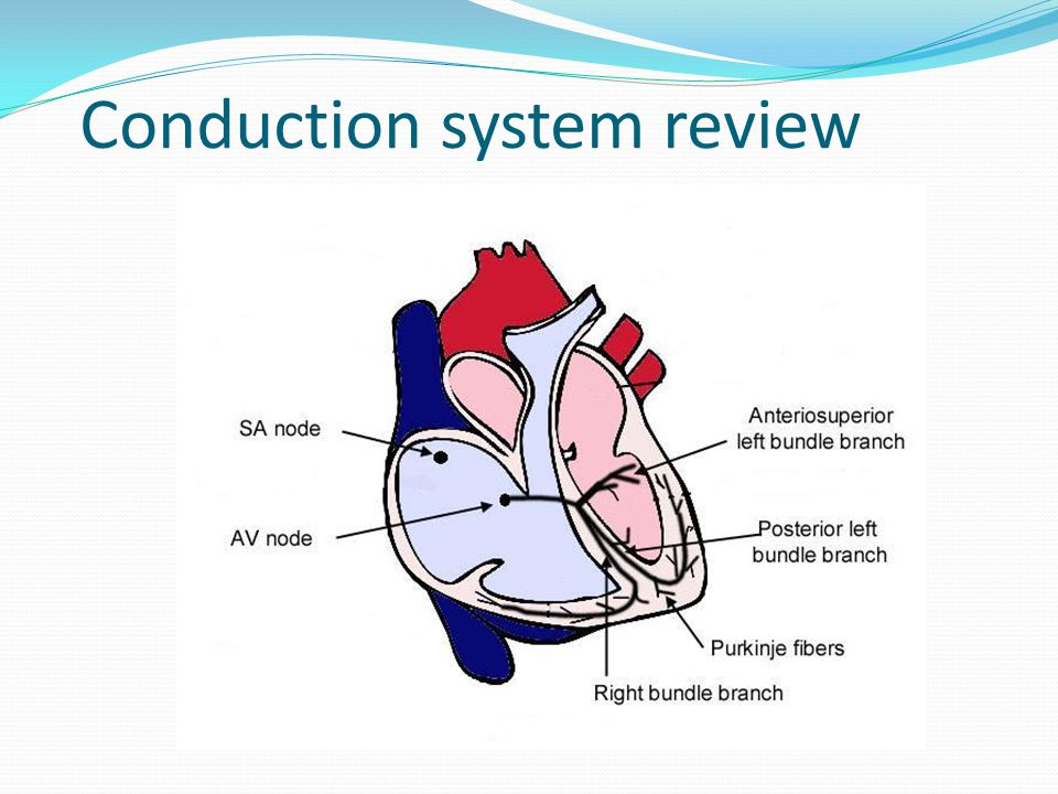 Conduction system review