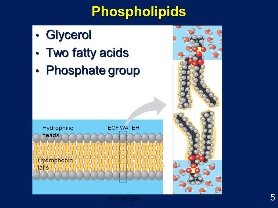 cell membrane structure and function ppt video online