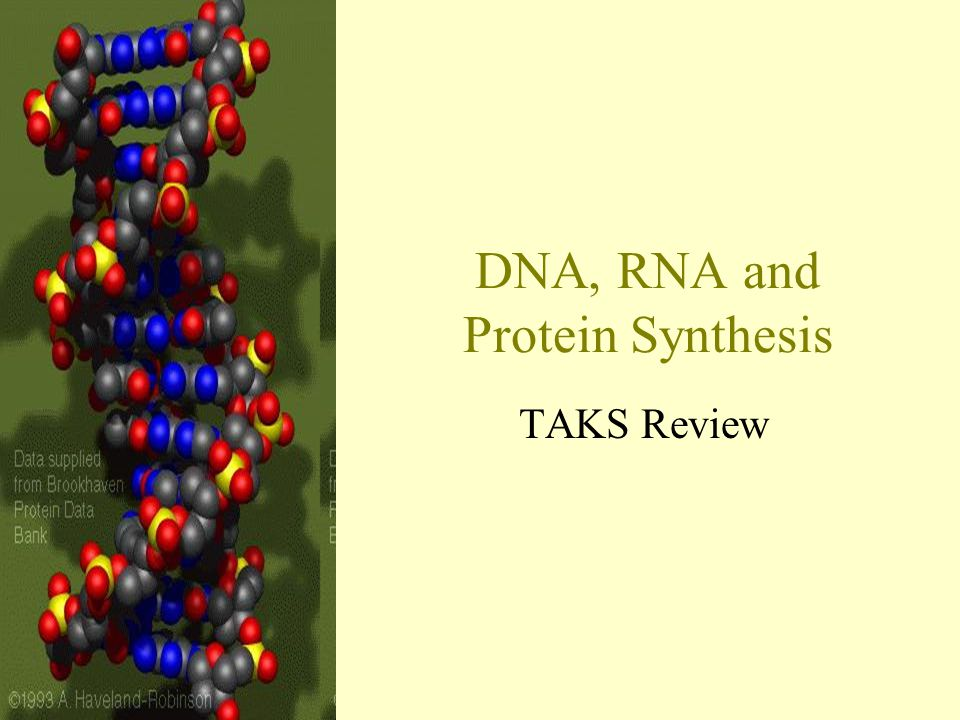 rna and protein synthesis pdf