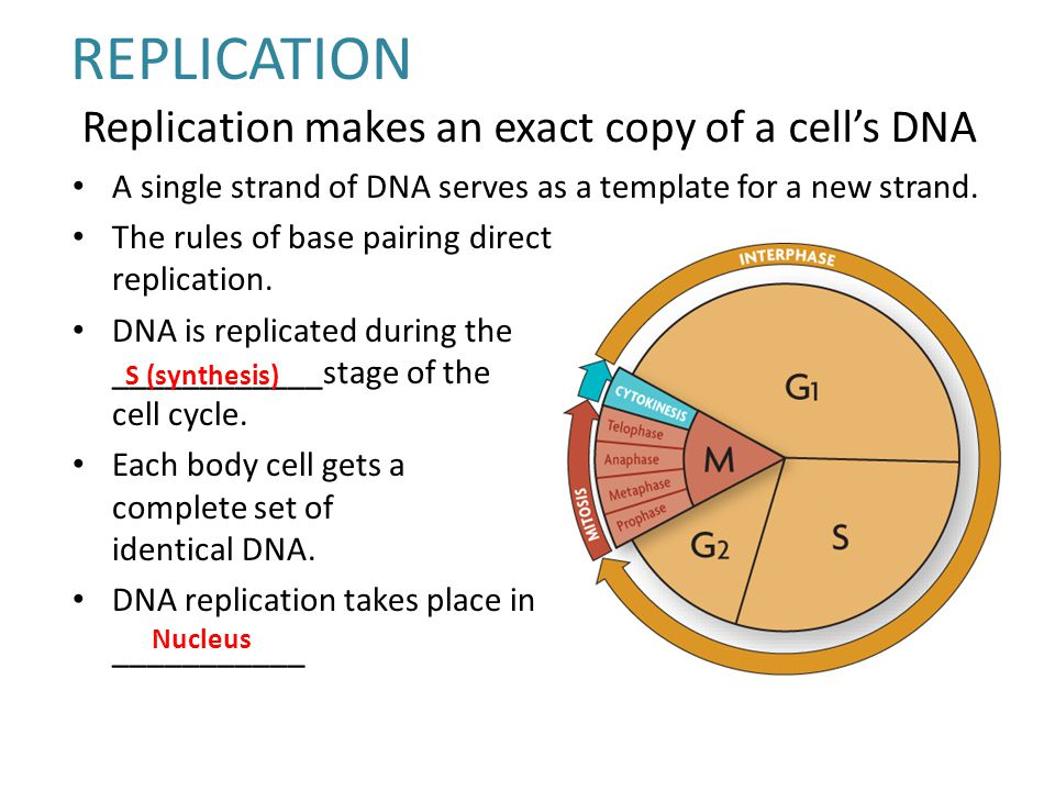 Dna life 39 s code ppt video online download for Explain how dna serves as its own template during replication