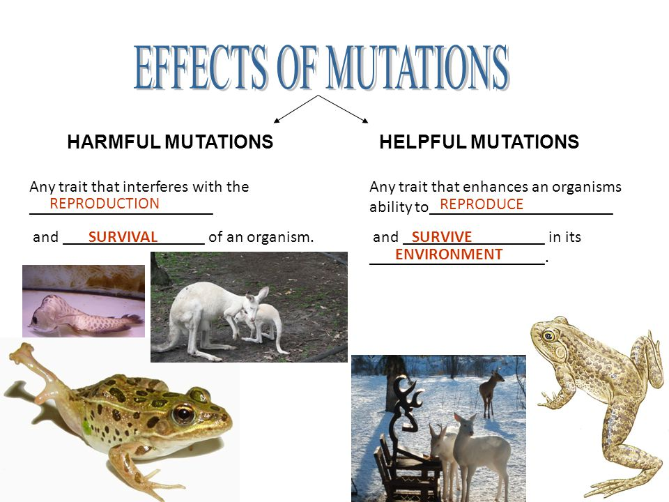 the effect of mutations on living Mutations mutations are genetic accidents that occur in living things like all accidents, they cause harm and destruction evolution through mutation is as unlikely as the improvement of.