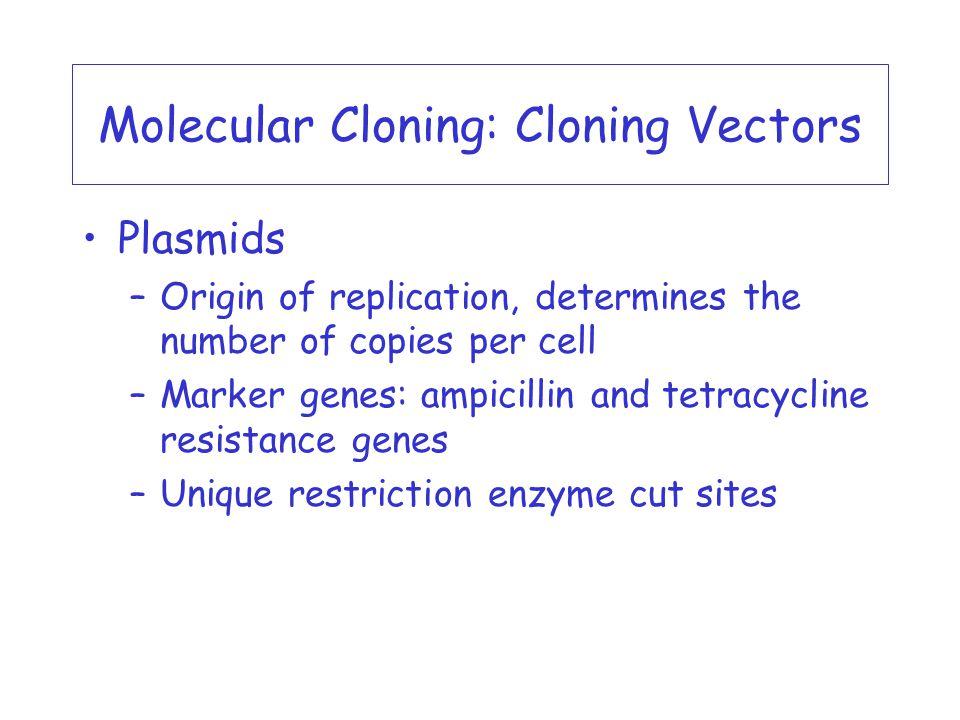 molecular cloning a laboratory manual pdf