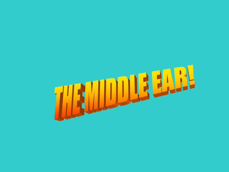 THE MIDDLE EAR!
