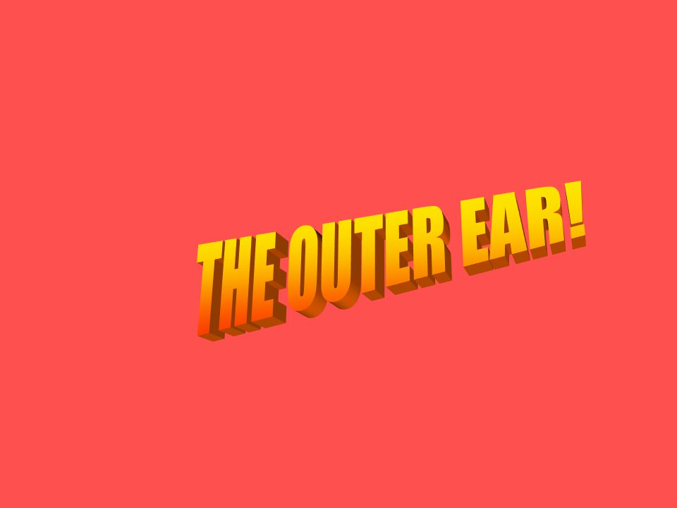 THE OUTER EAR!