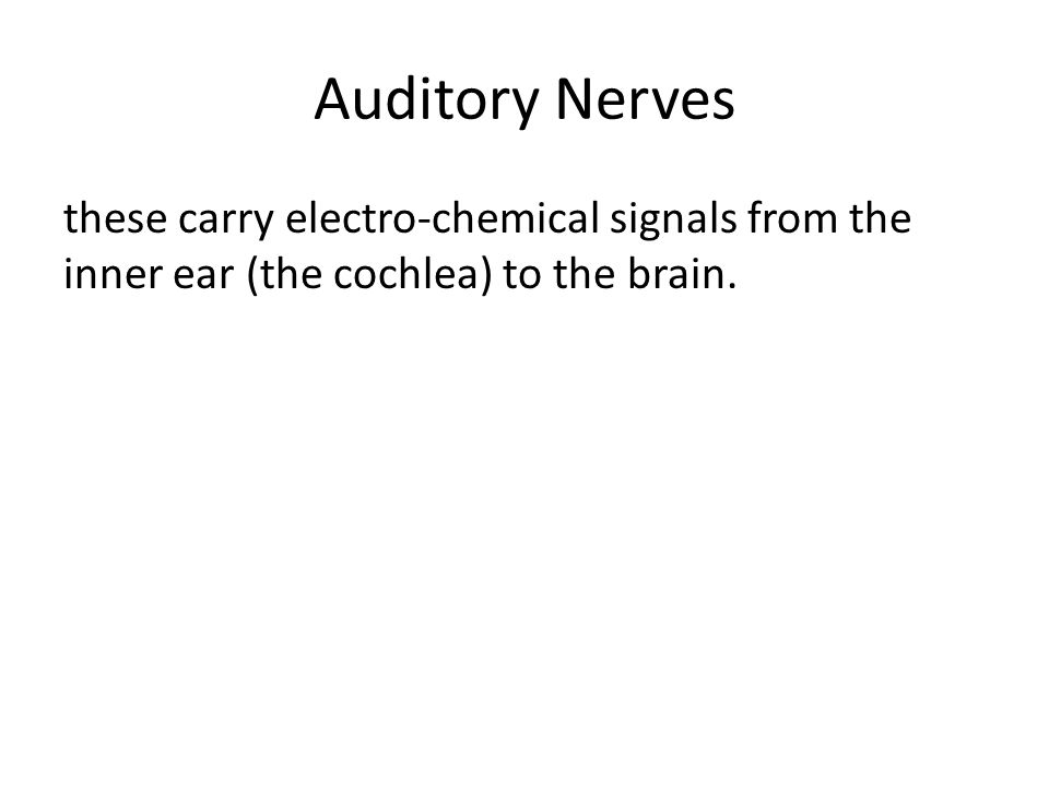 Auditory Nerves these carry electro-chemical signals from the inner ear (the cochlea) to the brain.