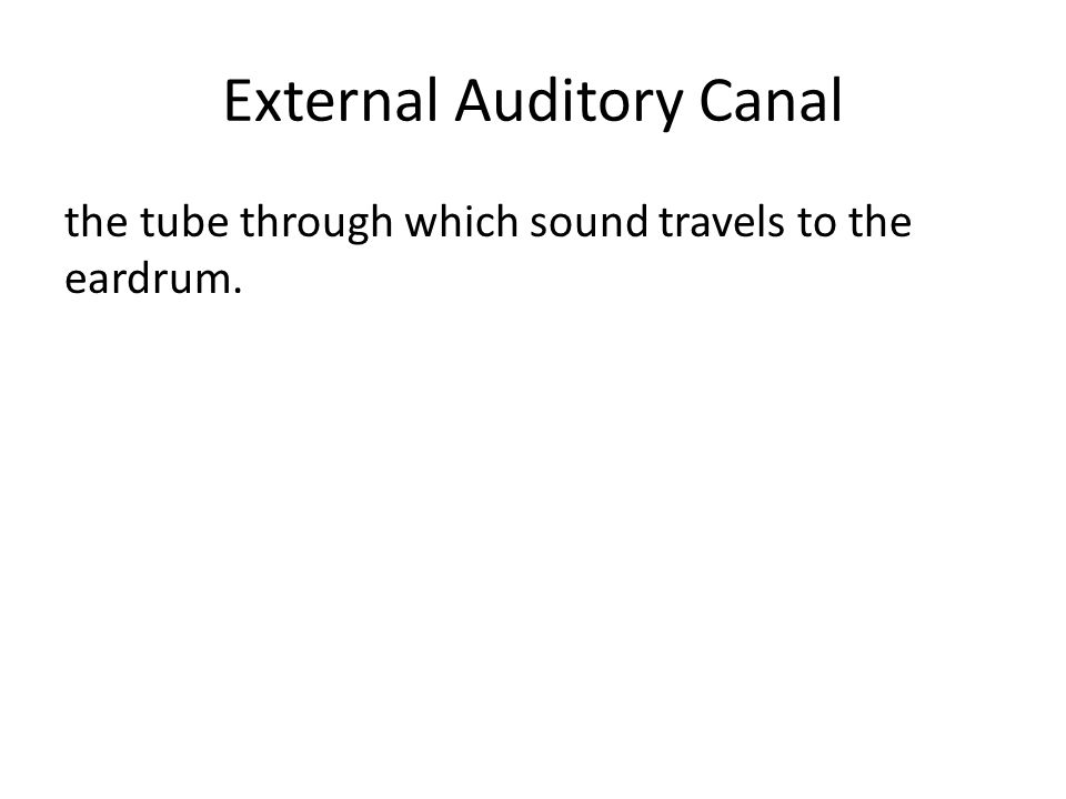 External Auditory Canal