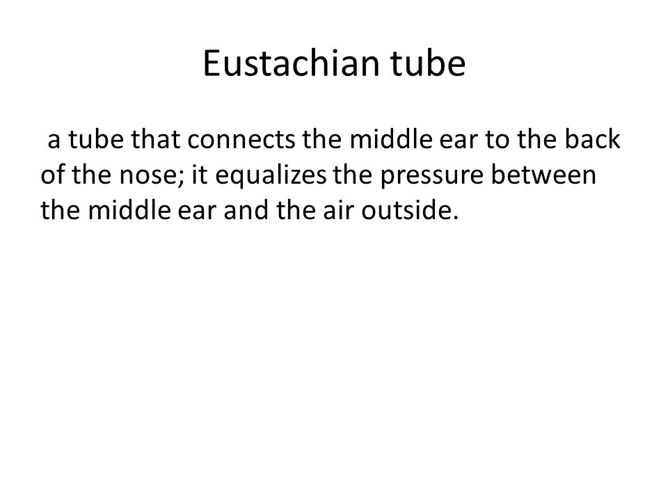 Eustachian tube a tube that connects the middle ear to the back of the nose; it equalizes the pressure between the middle ear and the air outside.