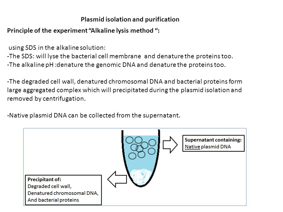 isolation and purification of cholesterol from Isolate cholesterol oxidase producing bacteria from samples collected from  different  purification of cholesterol oxidase was carried out by ammonium  sulphate.