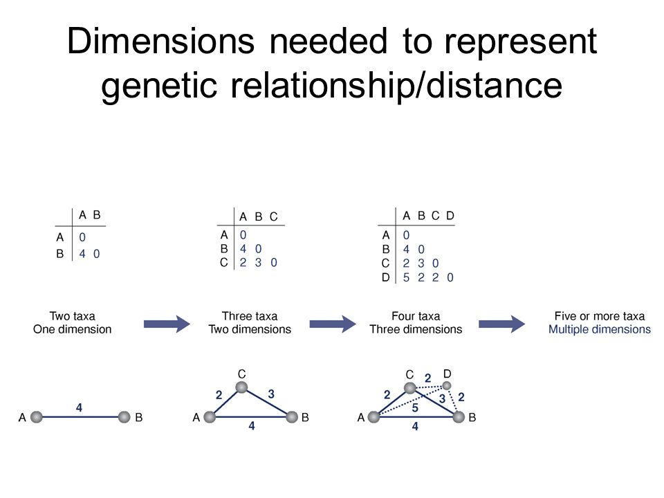 Dimensions needed to represent genetic relationship/distance