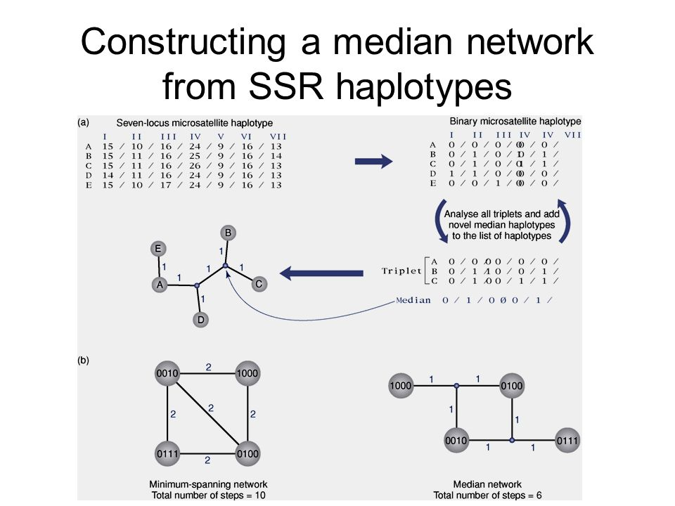 Constructing a median network from SSR haplotypes