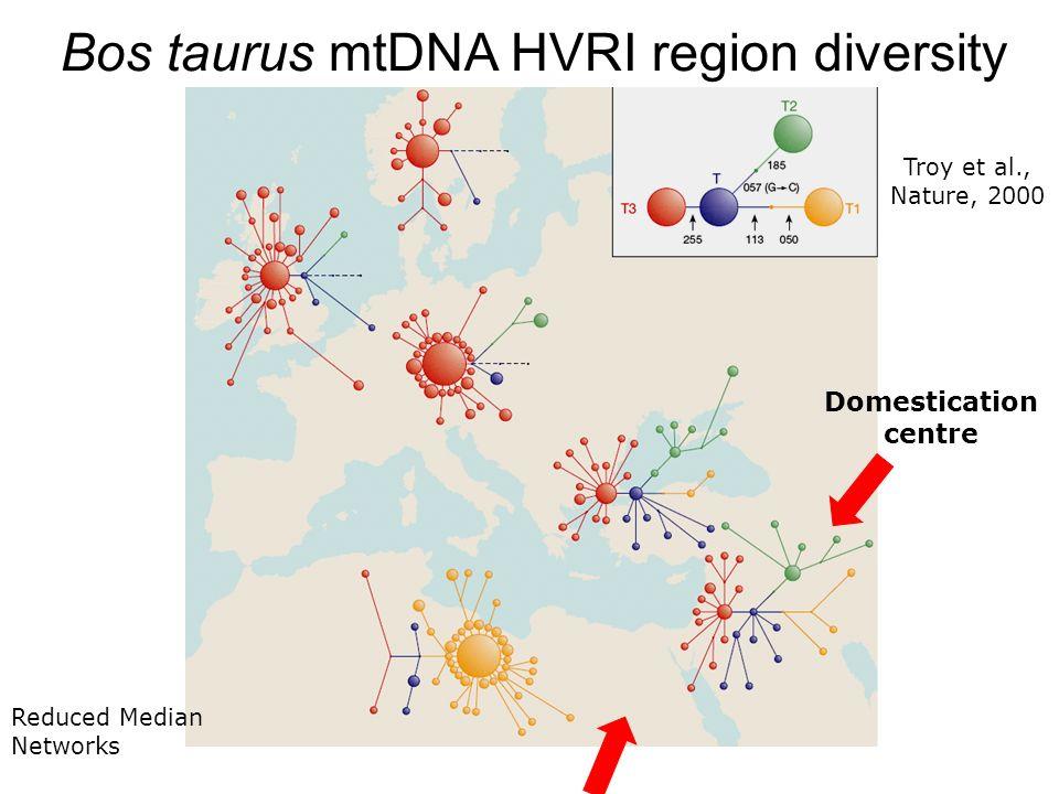 Bos taurus mtDNA HVRI region diversity