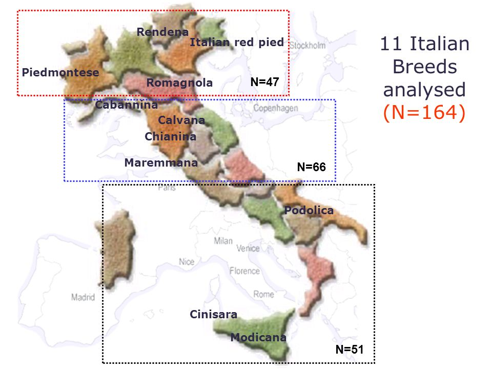 11 Italian Breeds analysed