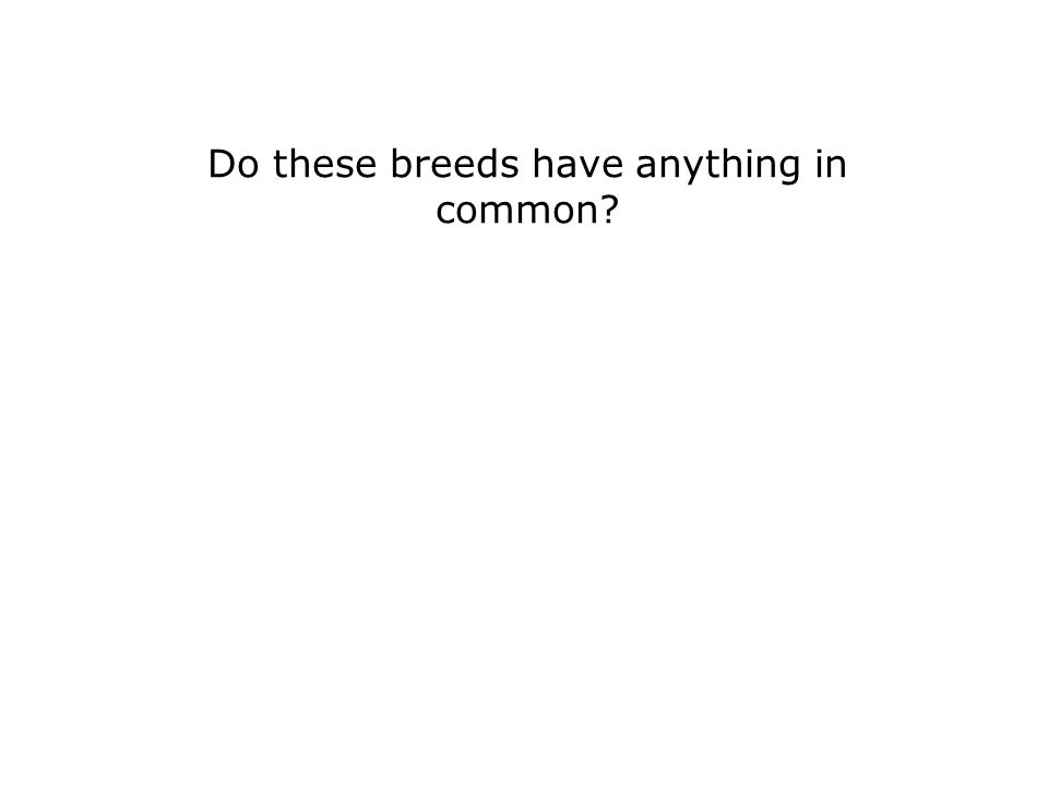 Do these breeds have anything in common