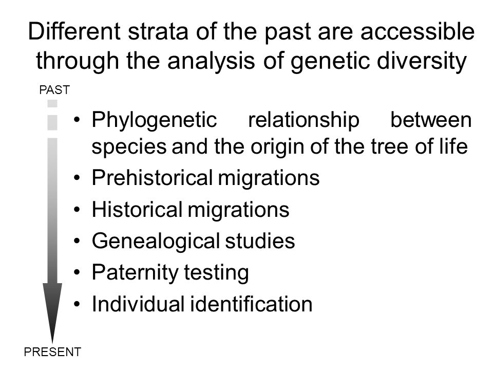 Different strata of the past are accessible through the analysis of genetic diversity