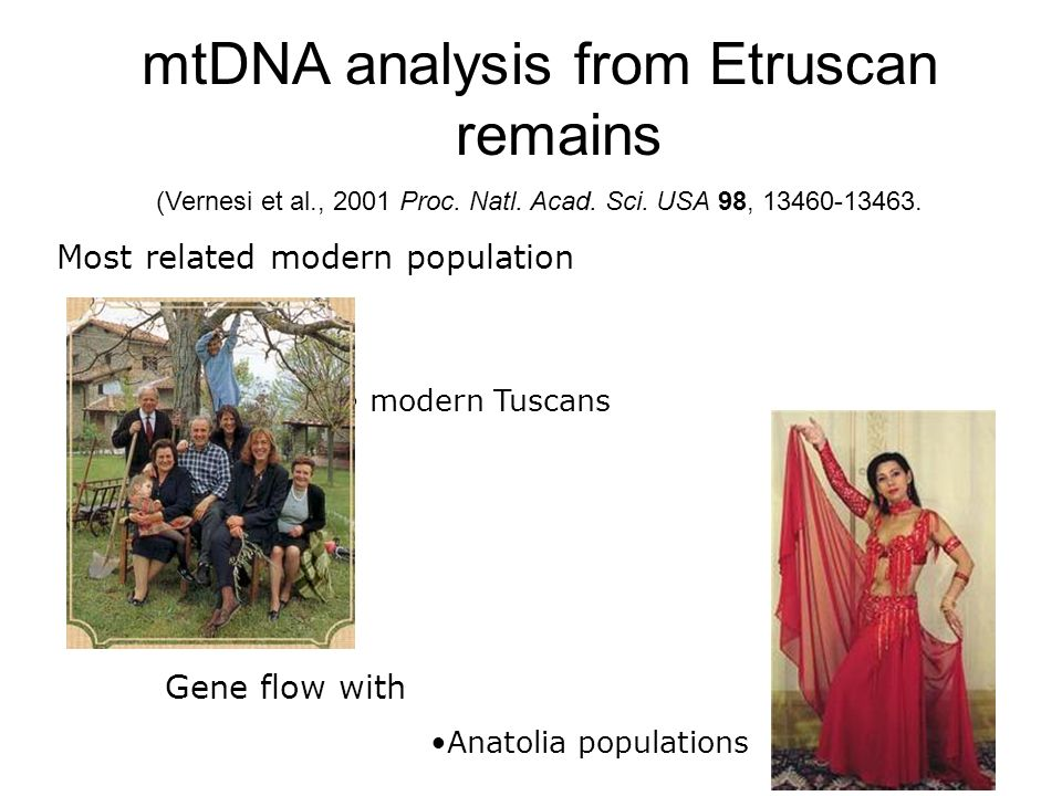 mtDNA analysis from Etruscan remains