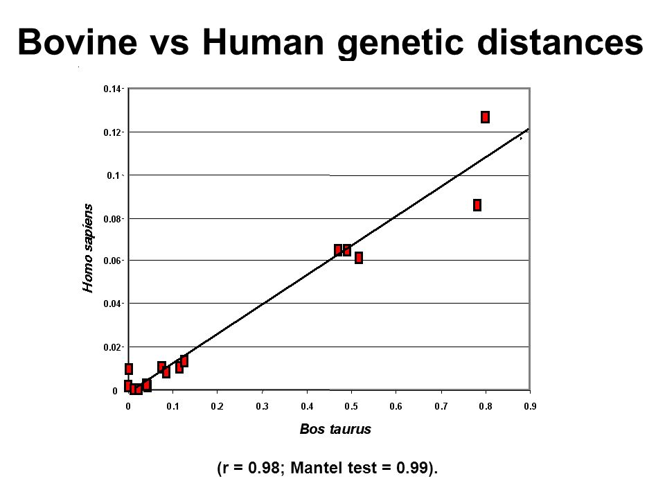 Bovine vs Human genetic distances