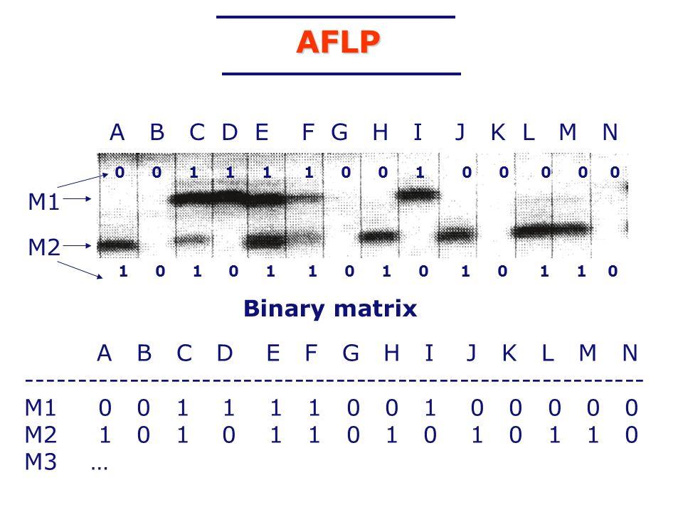 AFLP A B C D E F G H I J K L M N M1 M2 Binary matrix
