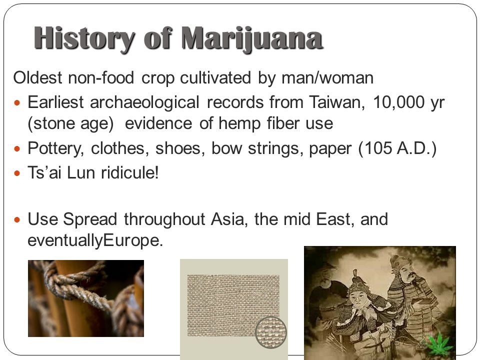 an analysis of the history and uses of marijuana cannabis sativa Rapd analysis of seized marijuana (cannabis sativa l) in turkey 3 table 1  cannabis accessions used in the study and their origin sample ida paralel idb.