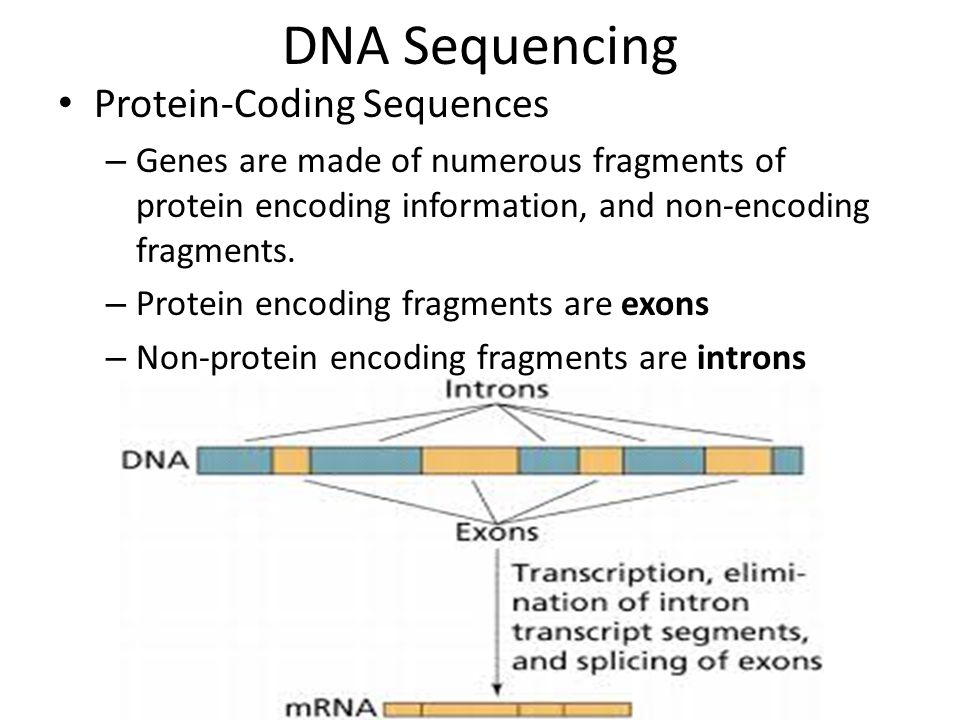 NUCLEIC ACIDS & PROTEINS - ppt video online download