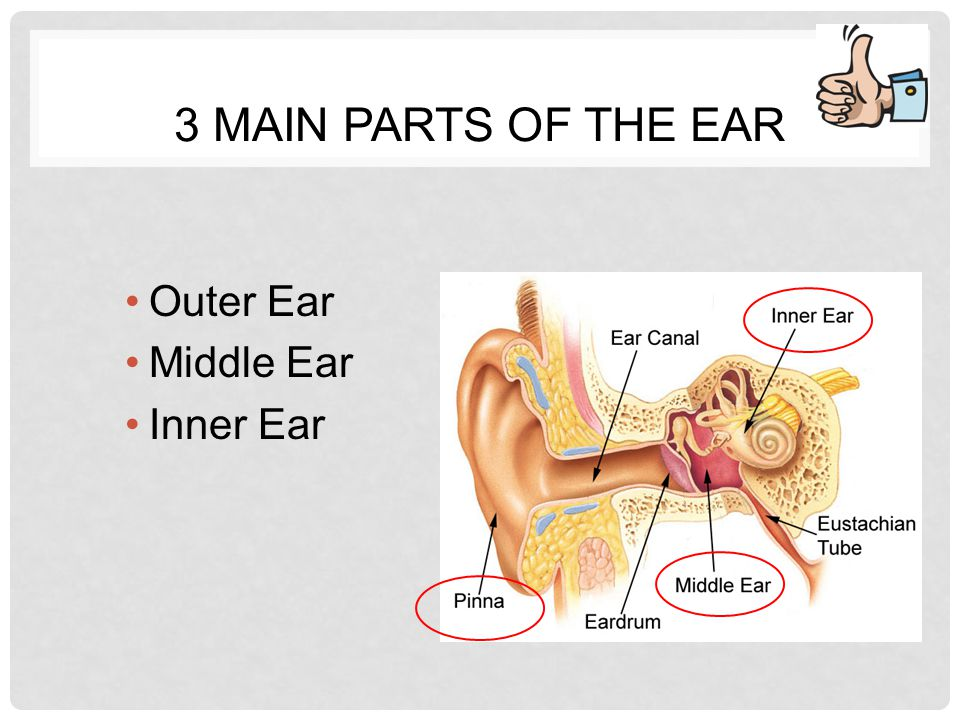 ear notes/sound. - ppt video online download, Sphenoid