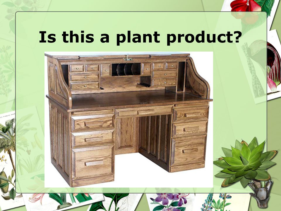 Is this a plant product
