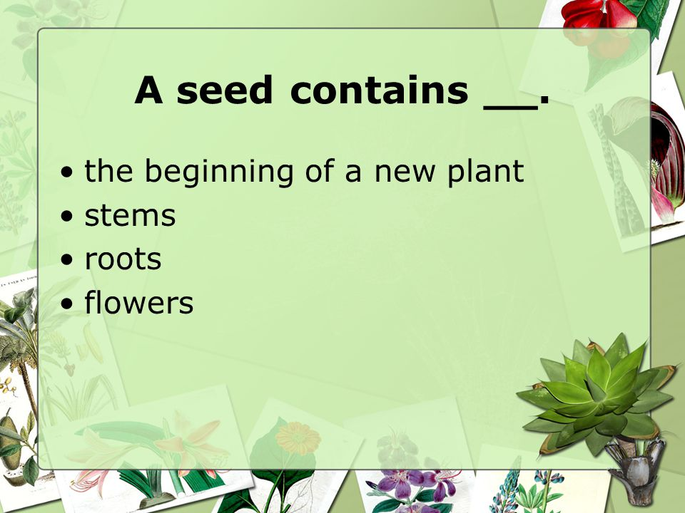 A seed contains __. the beginning of a new plant stems roots flowers