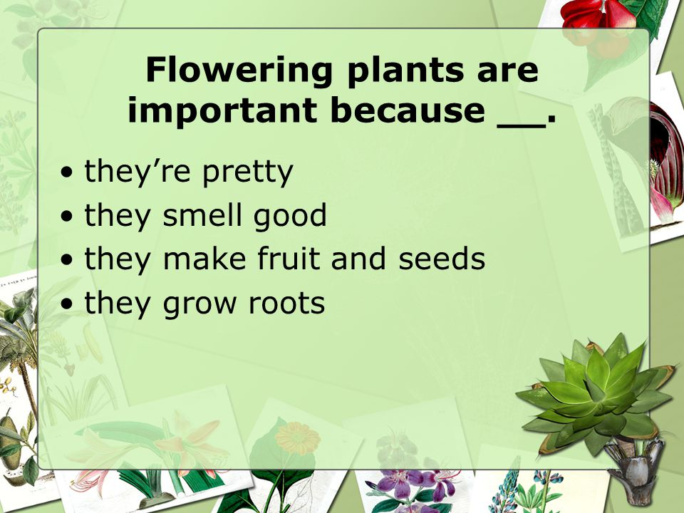 Flowering plants are important because __.