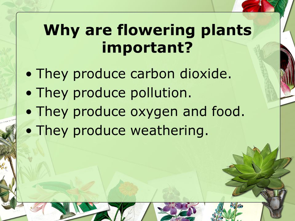 Why are flowering plants important