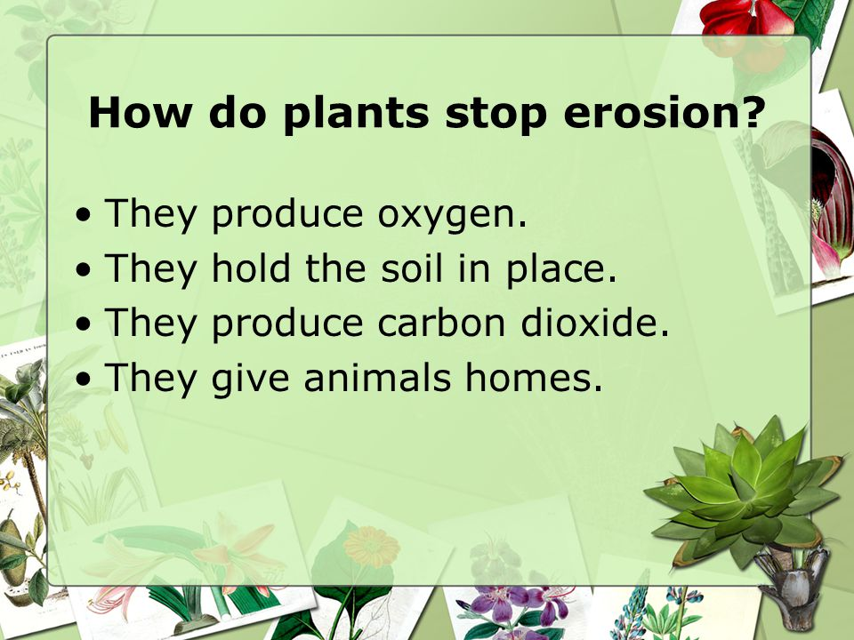 How do plants stop erosion