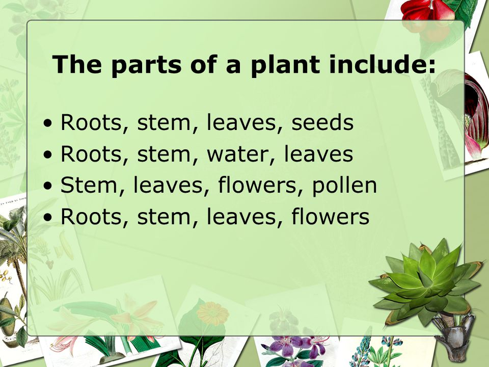 The parts of a plant include: