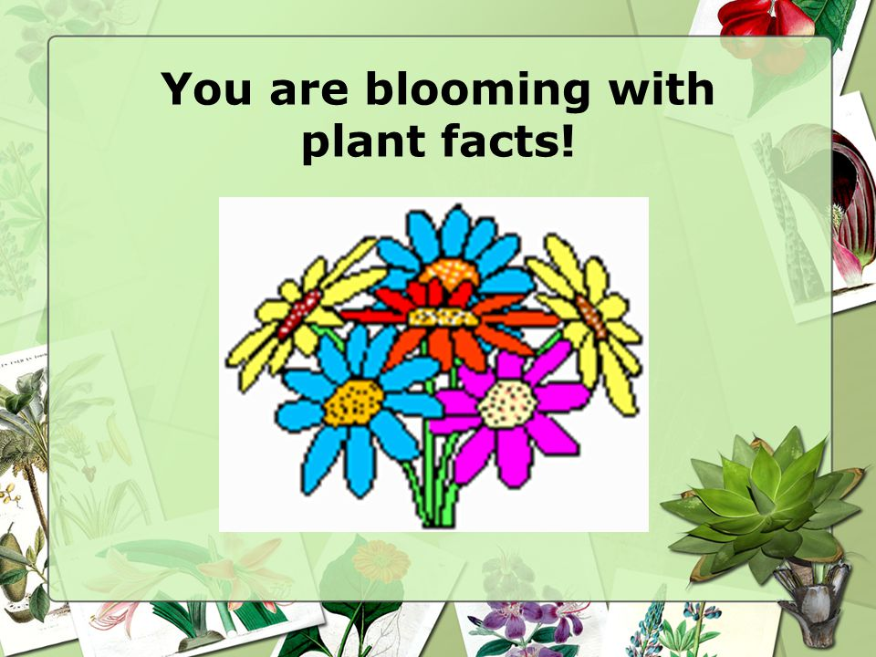You are blooming with plant facts!