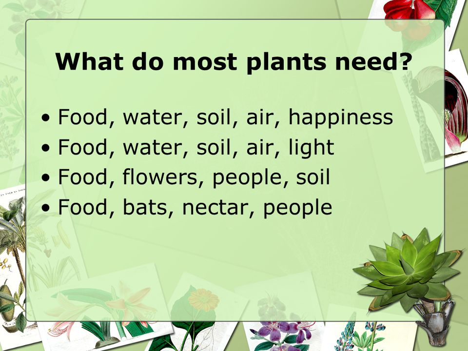 What do most plants need