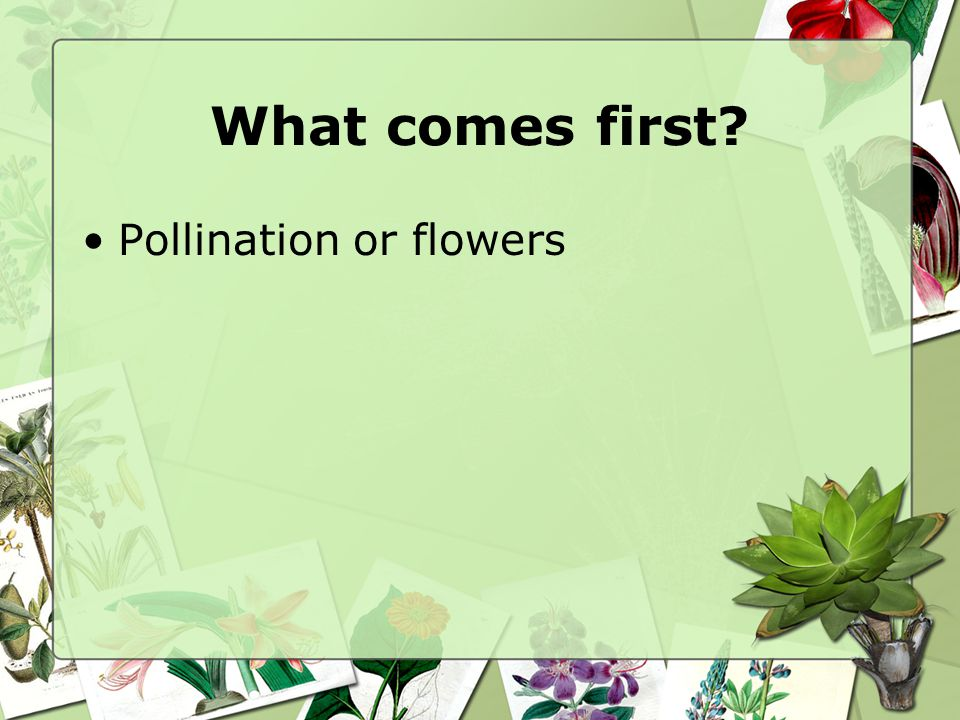 What comes first Pollination or flowers