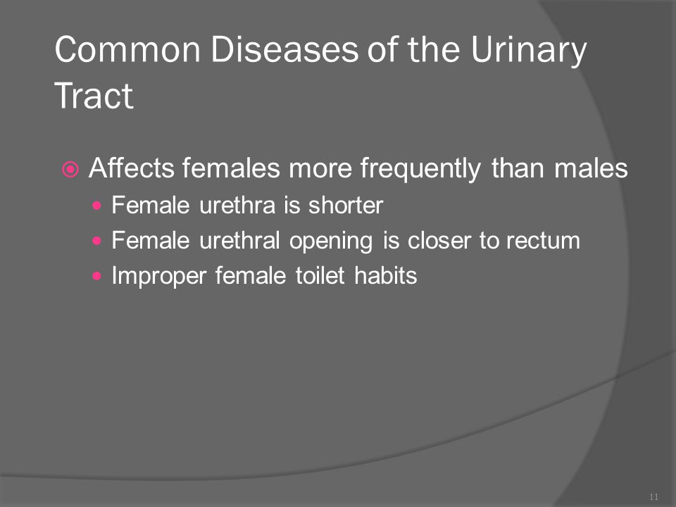Common Diseases of the Urinary Tract