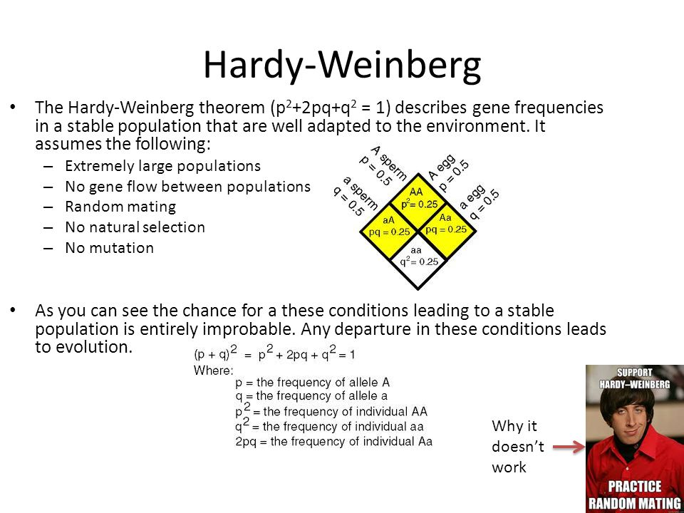 an overview of the hardy weinberg theorem Introduction the hardy-weinberg equation itself is quite simple, and can provide  a rough representation of the gene frequency in a population.