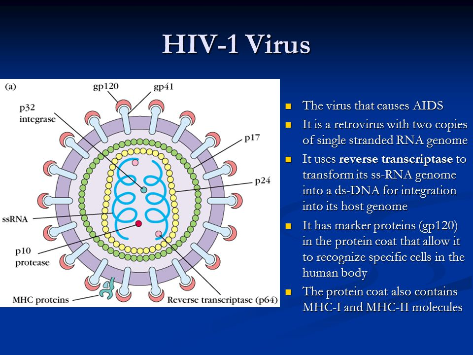 AIDS and Other Immunodeficiencies - ppt video online download