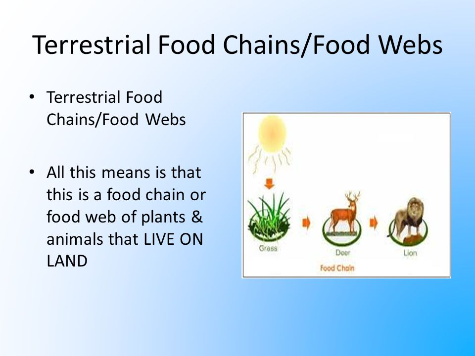 Flow of Energy through Food Chains - ppt download