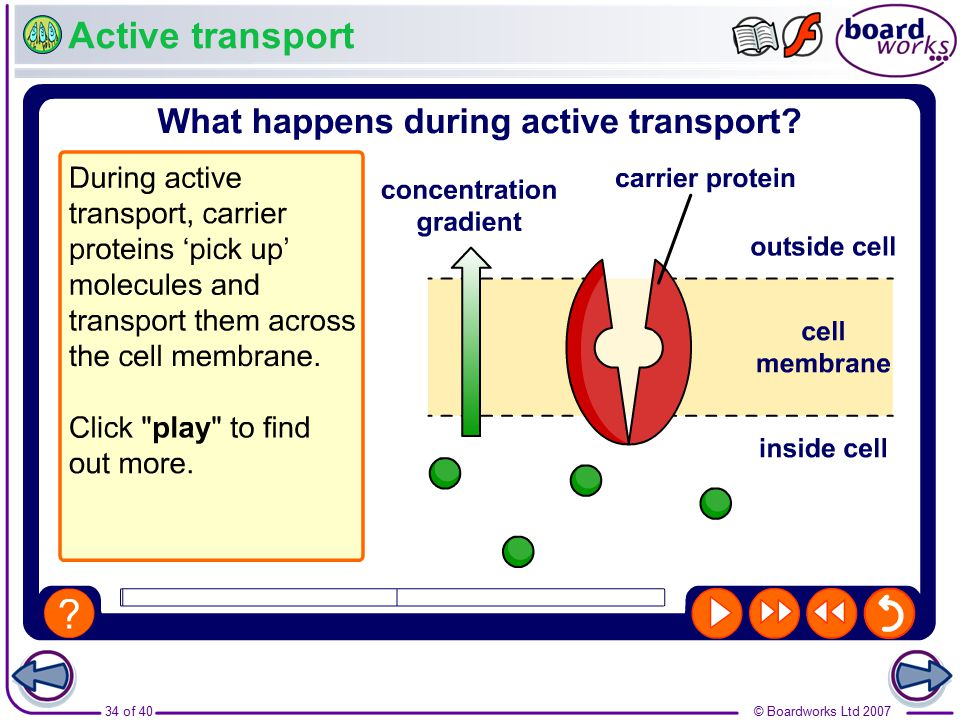 Boardworks Gcse Additional Science Biology Transport In Plants
